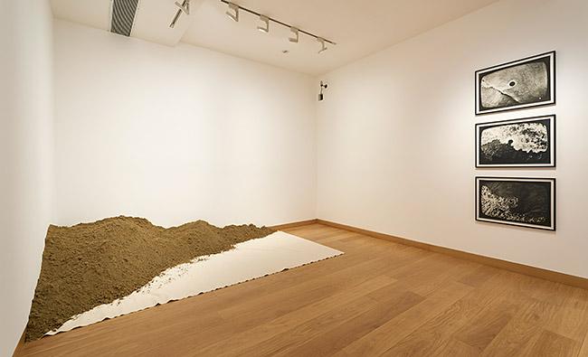 Waddington Custot Galleries Barry Flanagan 6