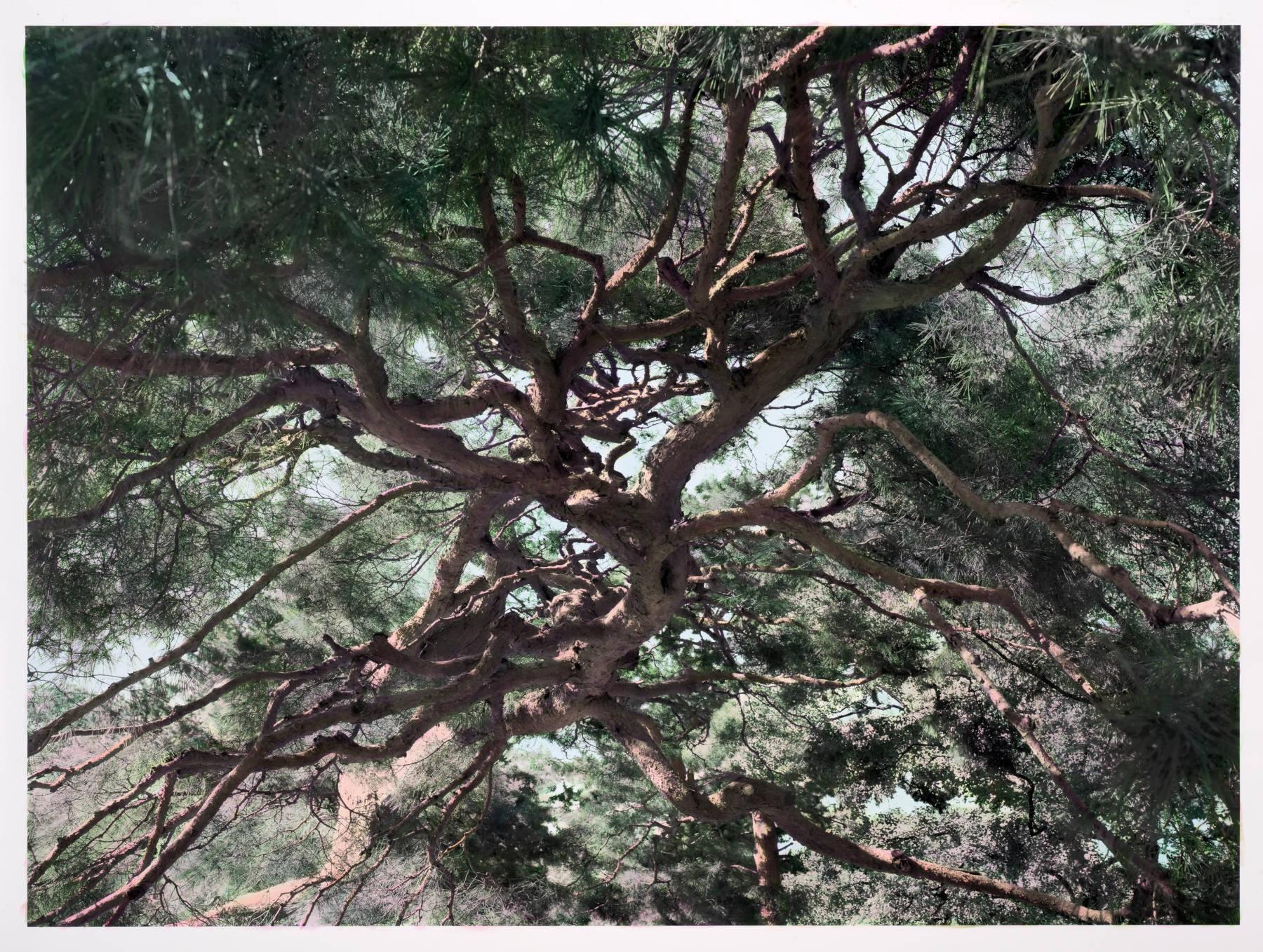 Hayward Gallery Among the Trees