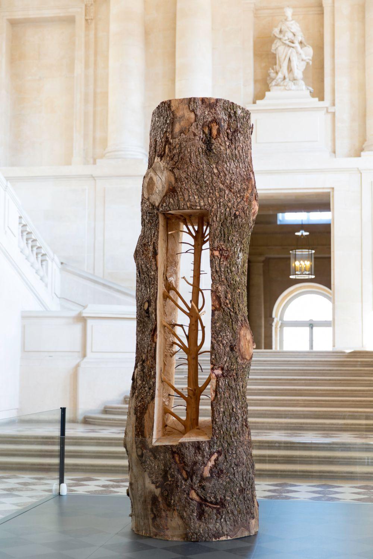 Albero Porta - Cedro/Door Tree - Cedar