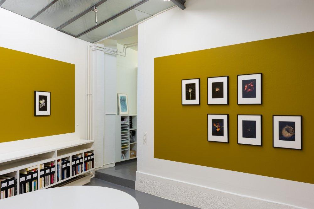Mai 36 Galerie Jitka Hanzlova 10