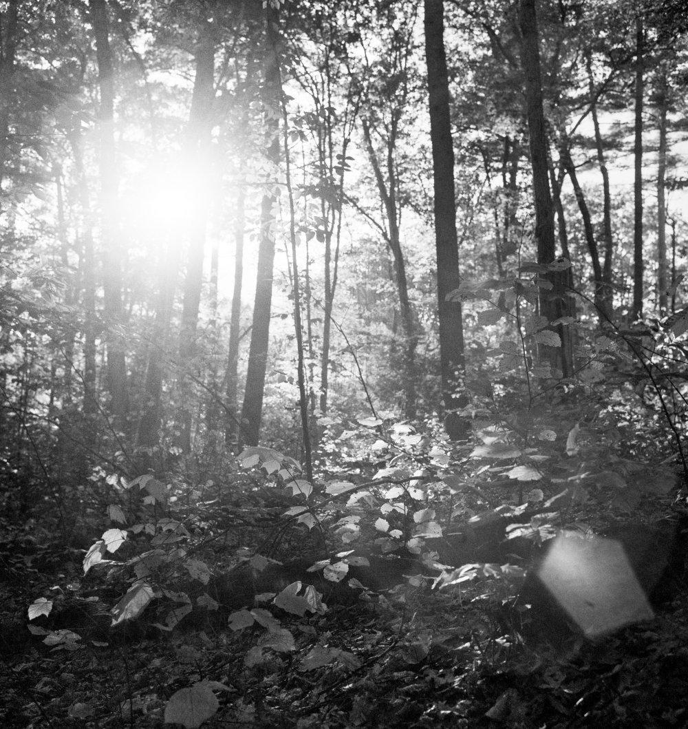Light refracting through trees
