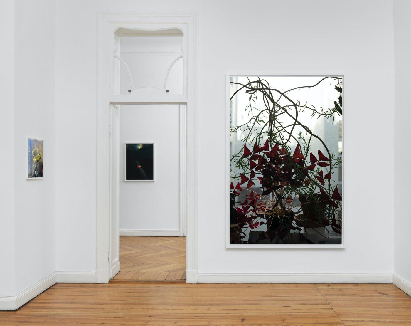 Galerie Buchholz Berlin Wolfgang Tillmans 4