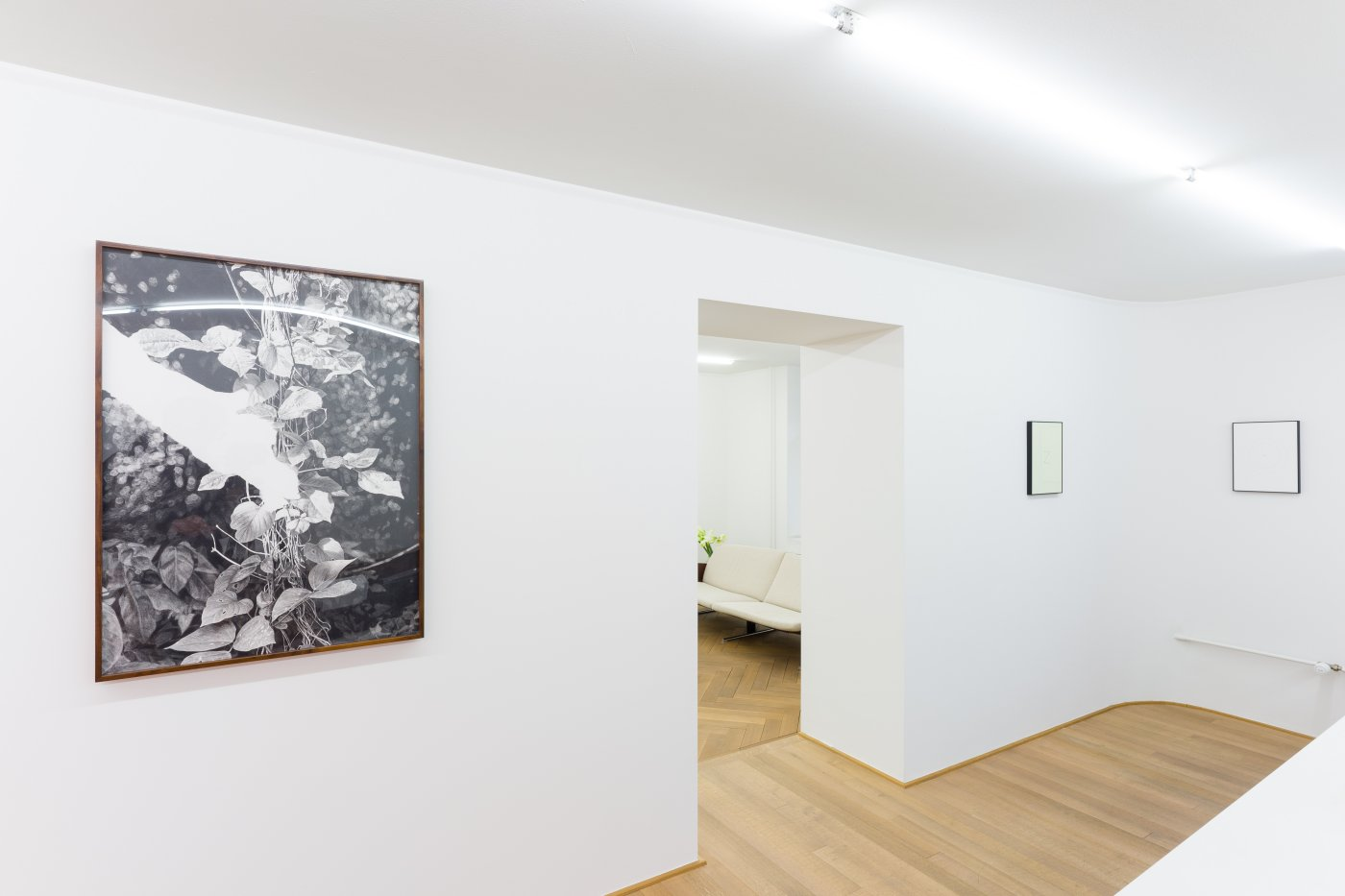 Mai 36 Galerie Ernst Caramelle Jorge Mendez Blake Christoph Rutimann 7
