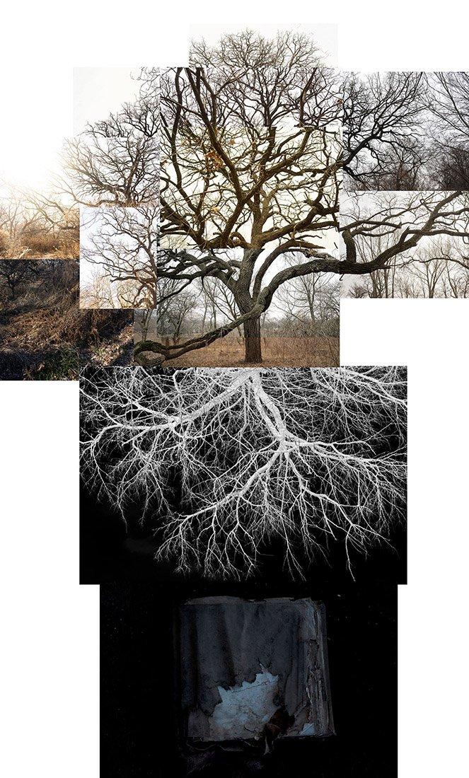 Bur Oak with Roots, Chicago, Jackson Park, January