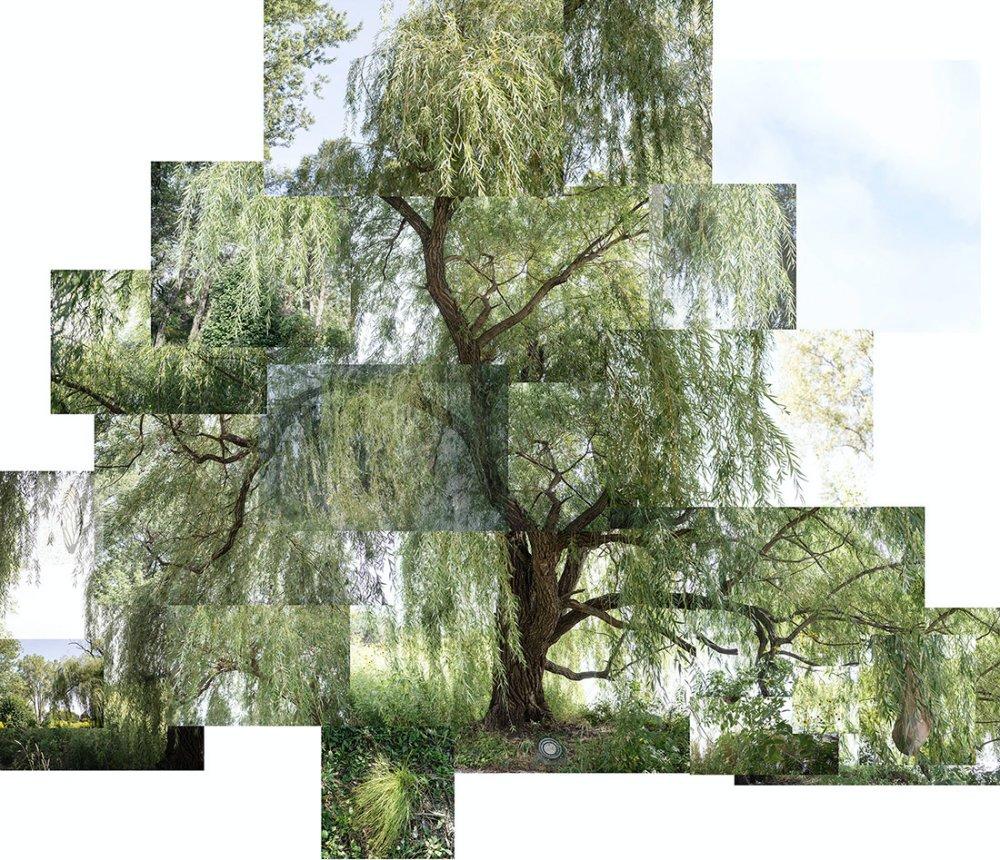 Willow Tree, Chicago, Jackson Park, September