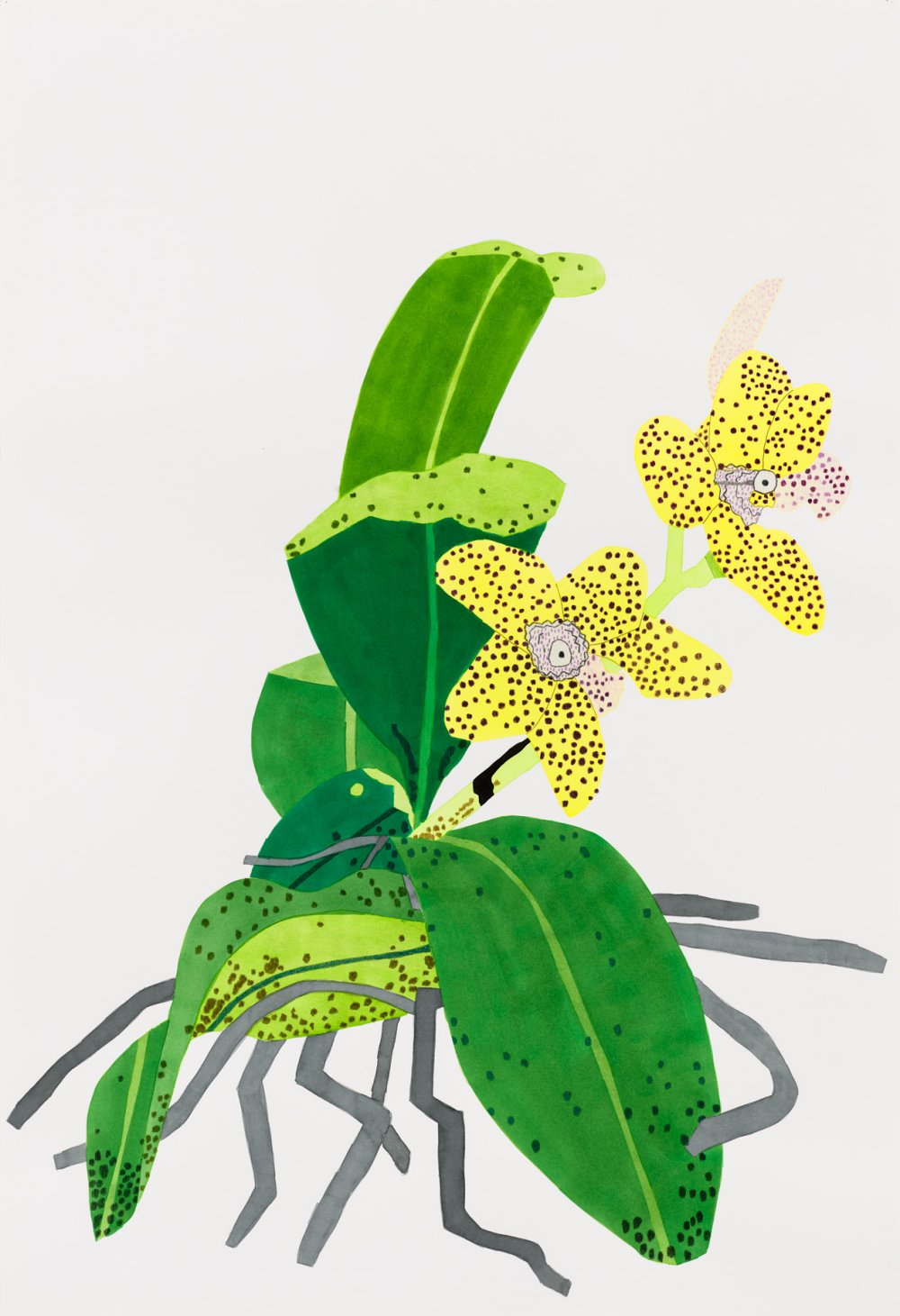 Yellow Orchid with Purple Dots