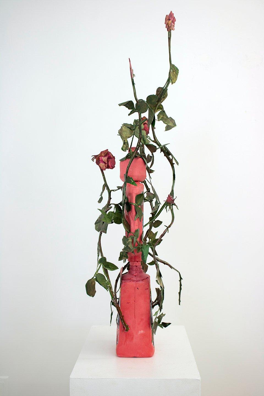 January Roses (Drano)
