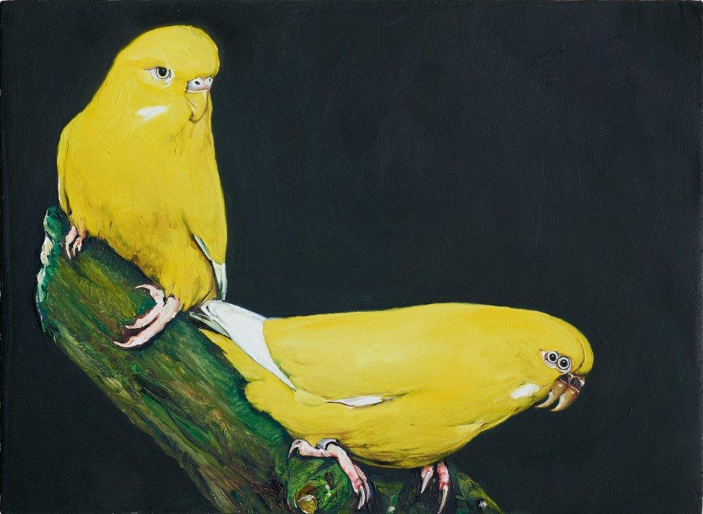 6 oiseau