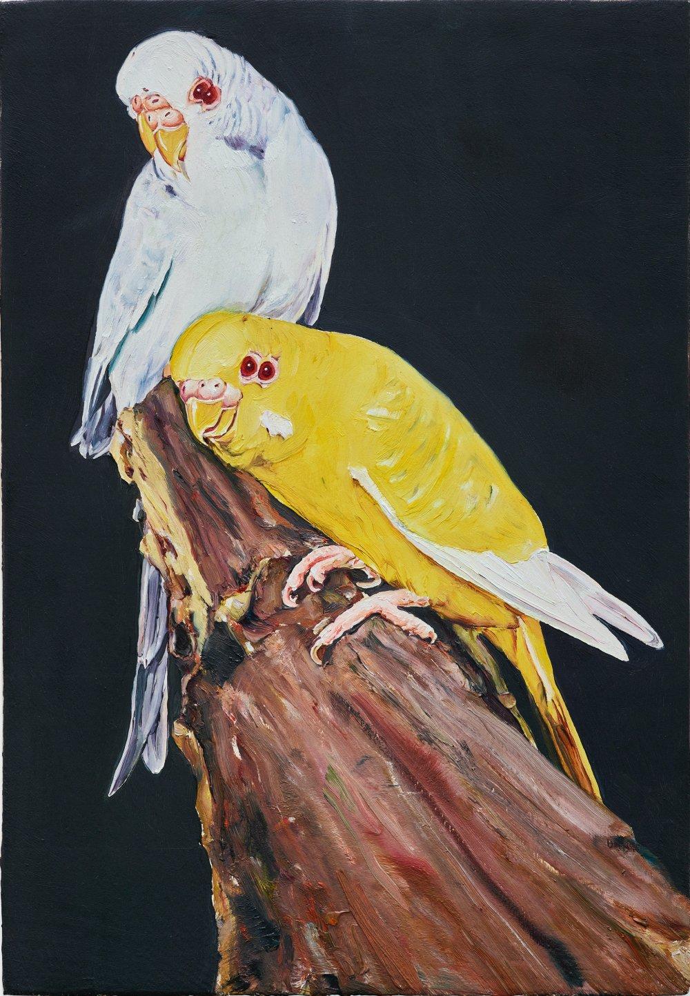 14 oiseau