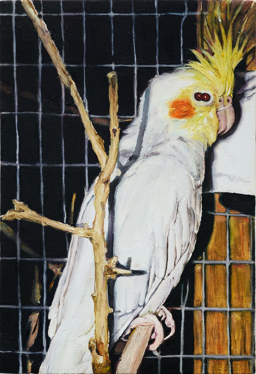 20 oiseau