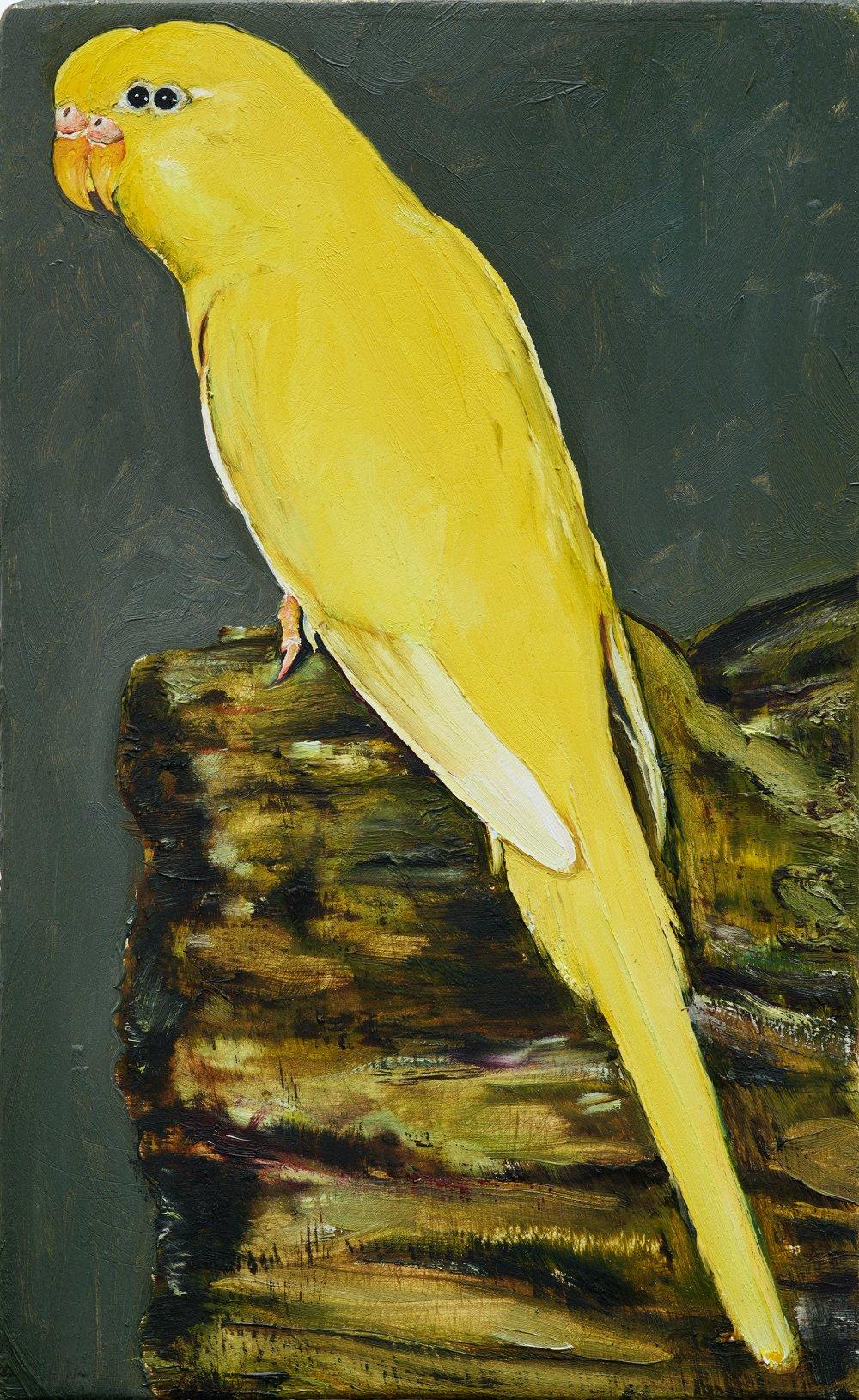 18 oiseau