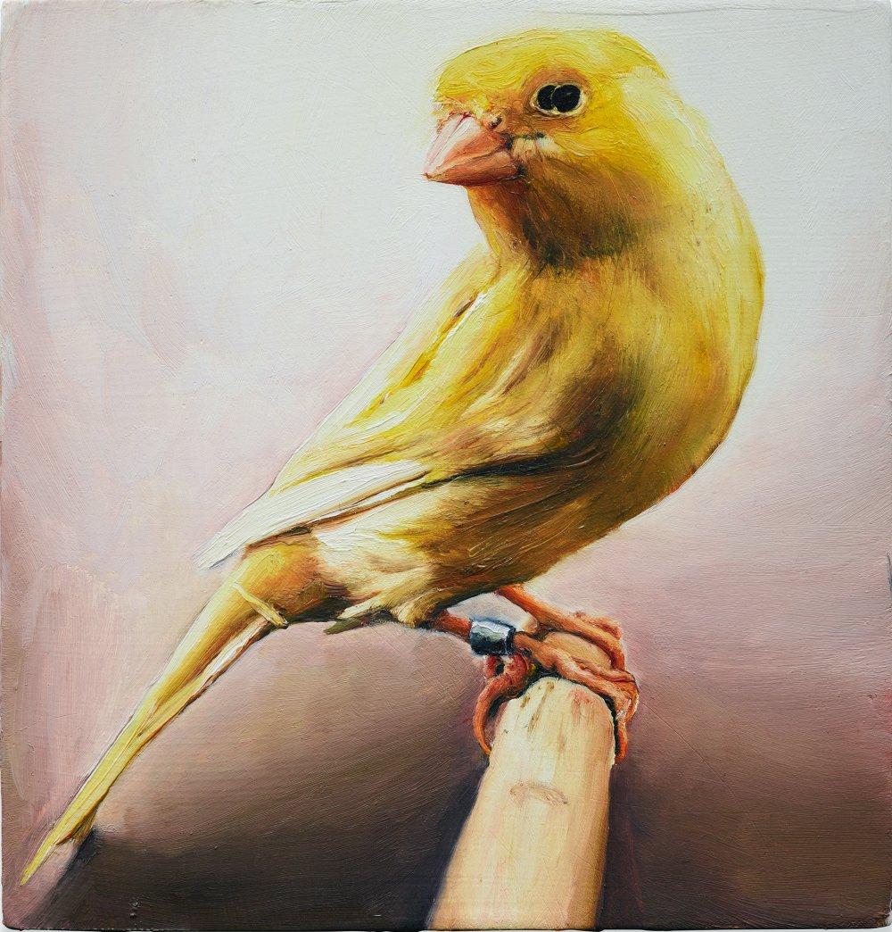 8 oiseau