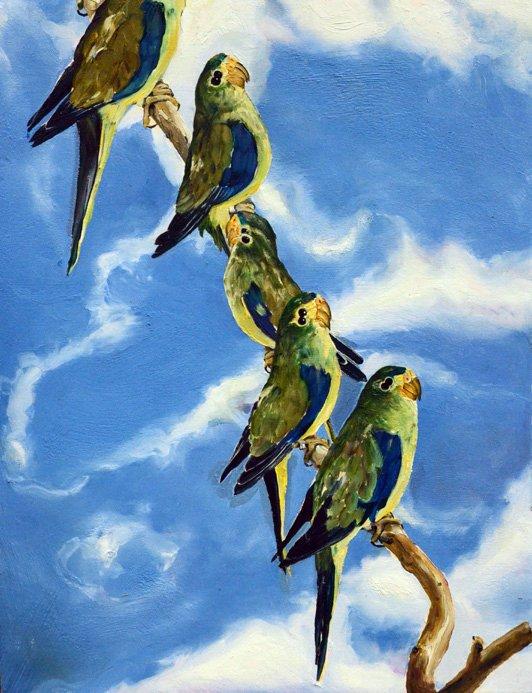9 oiseau