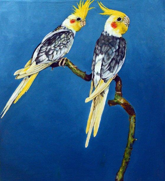 3 oiseau