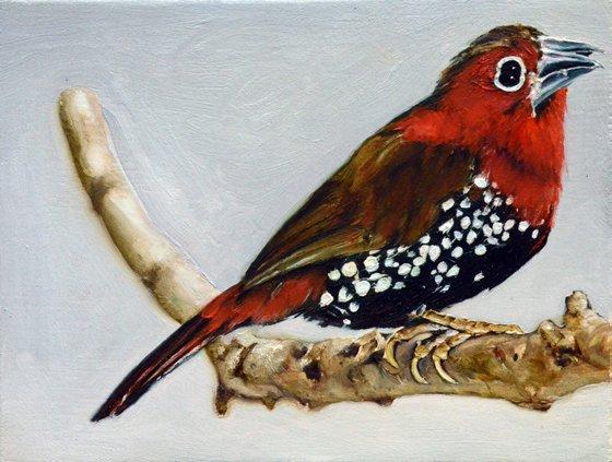 25 oiseau