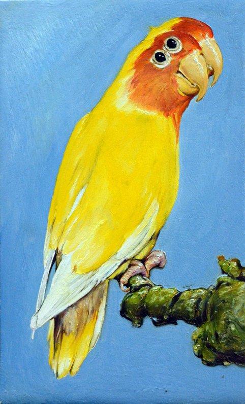 22 oiseau