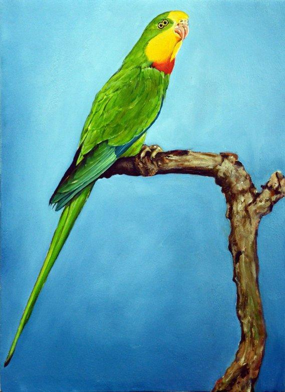 11 oiseau