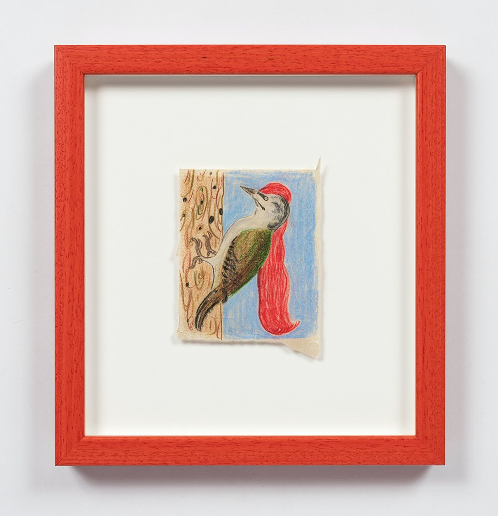 Long Red Haired Woodpecker