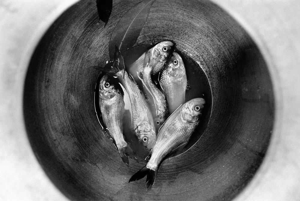 Fish in a pot. Village Benur, Bastar, India