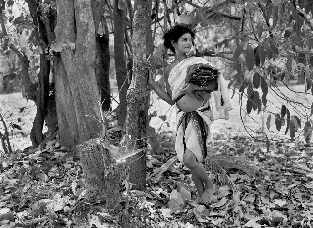 Leaf collector. Village Chherieda, Bastar, India