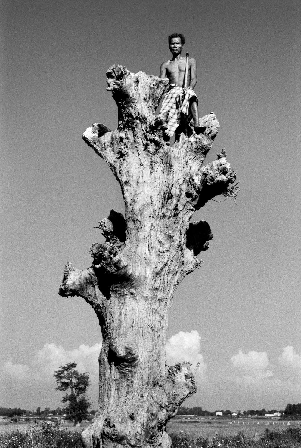Man on tree on the way to Nagarnar. Bastar, India