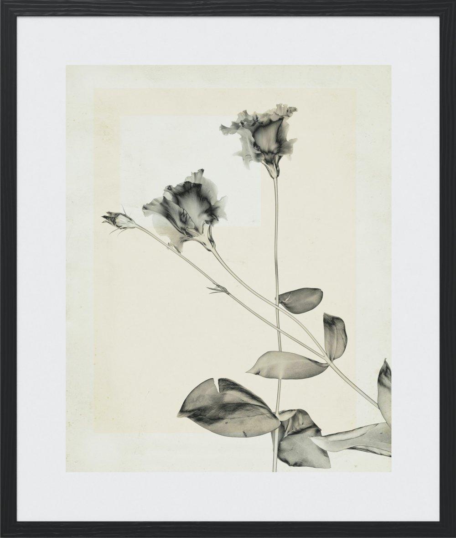 flower.s.23