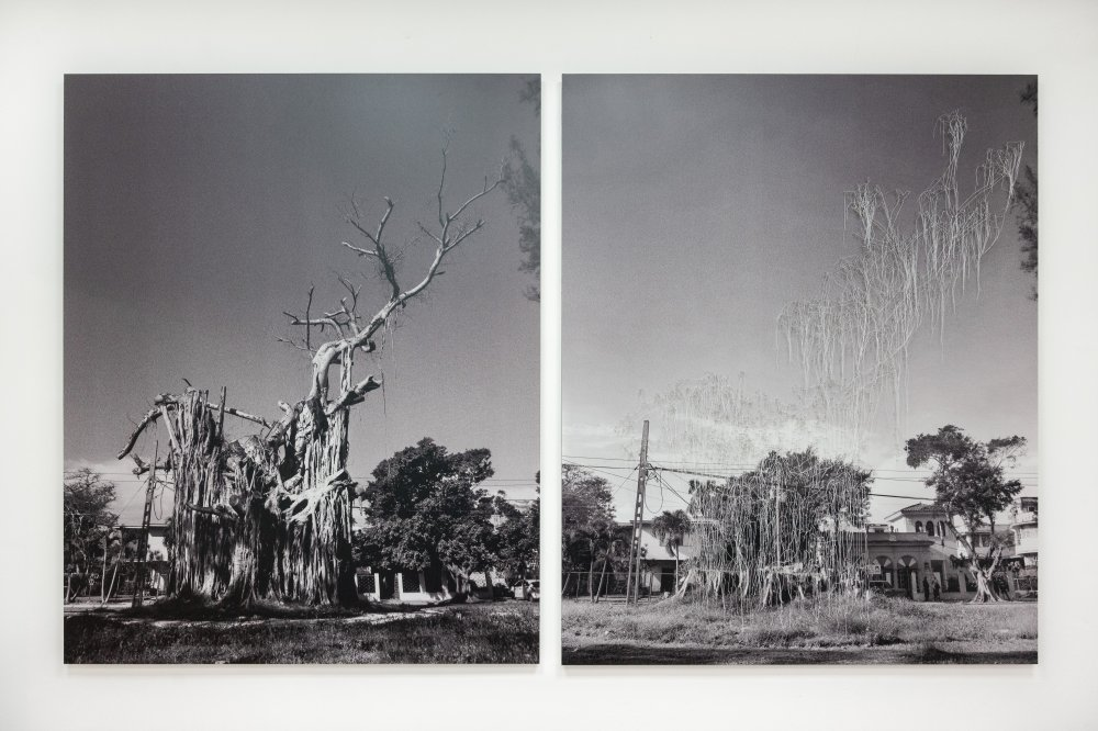 Sin título (Árbol) / Untitled (Tree)