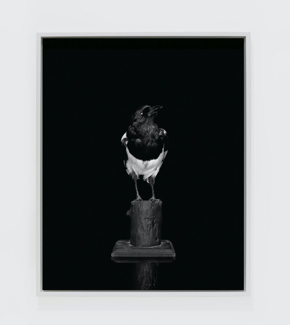 Magpie (Camera) (II)