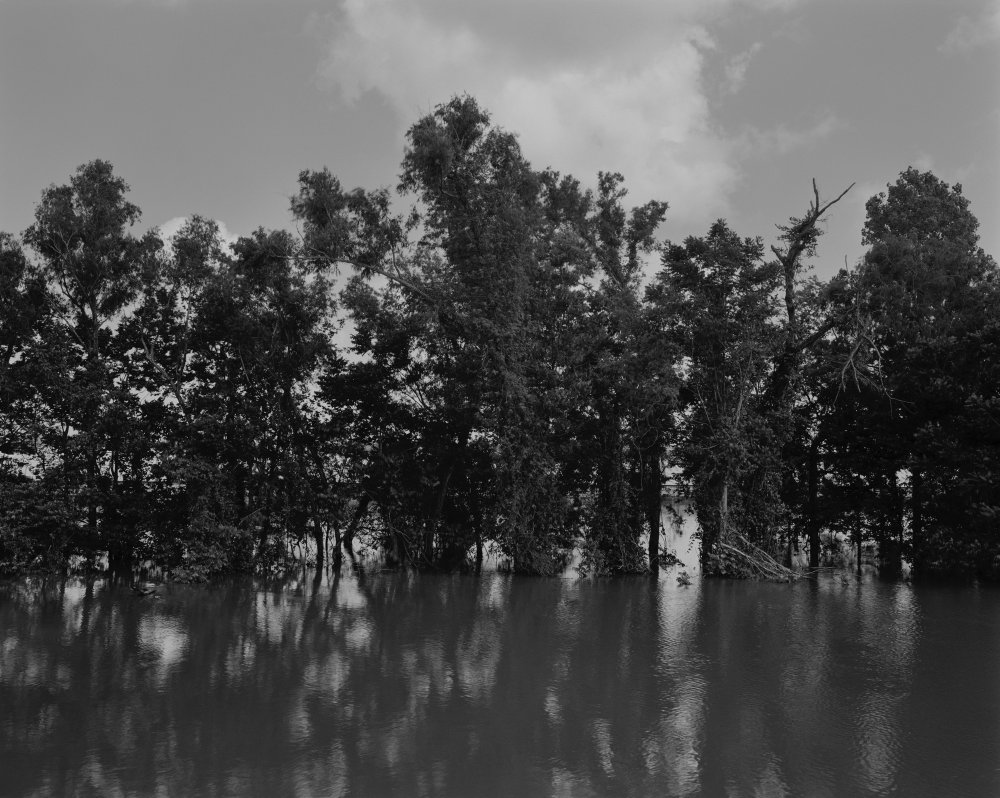Mississippi River and Trees