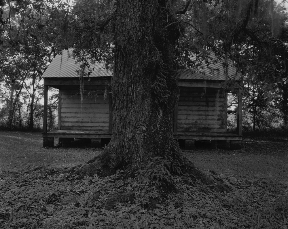Tree and Cabin