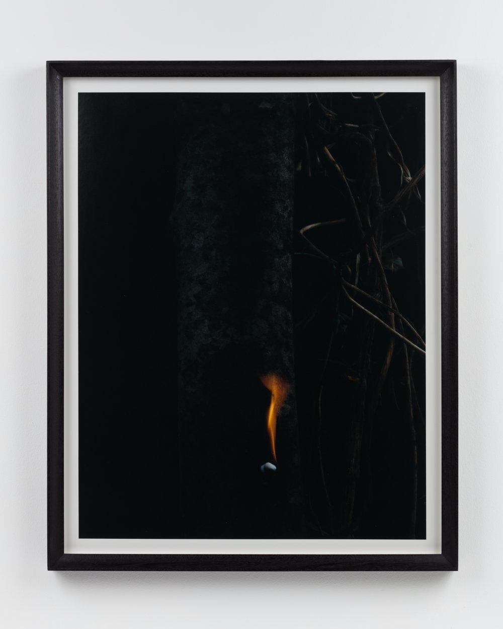Small Flame, Copal Tree I