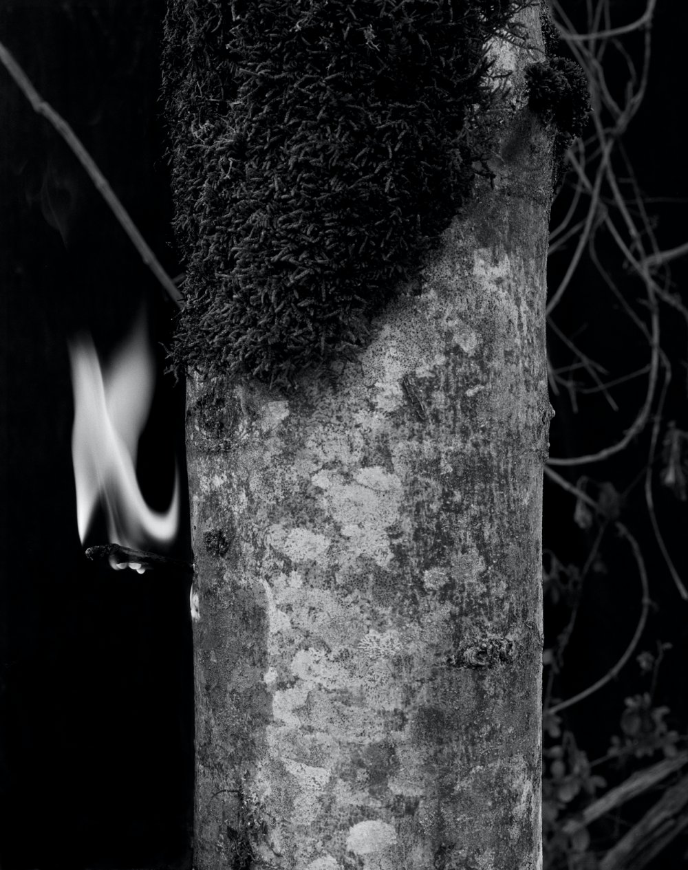 Small Flame, Copal Tree II