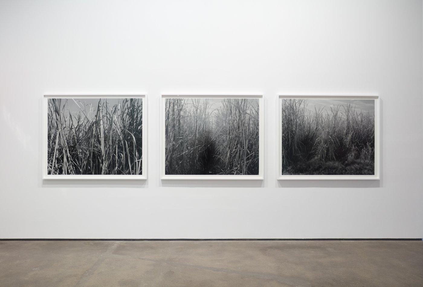 Sean Kelly Gallery Dawoud Bey 6