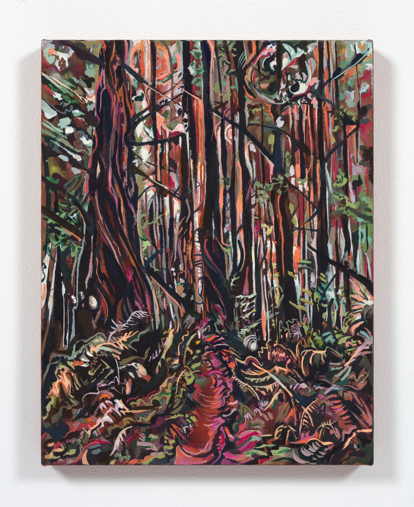 Tall Tree Grove (Redwood National Park)