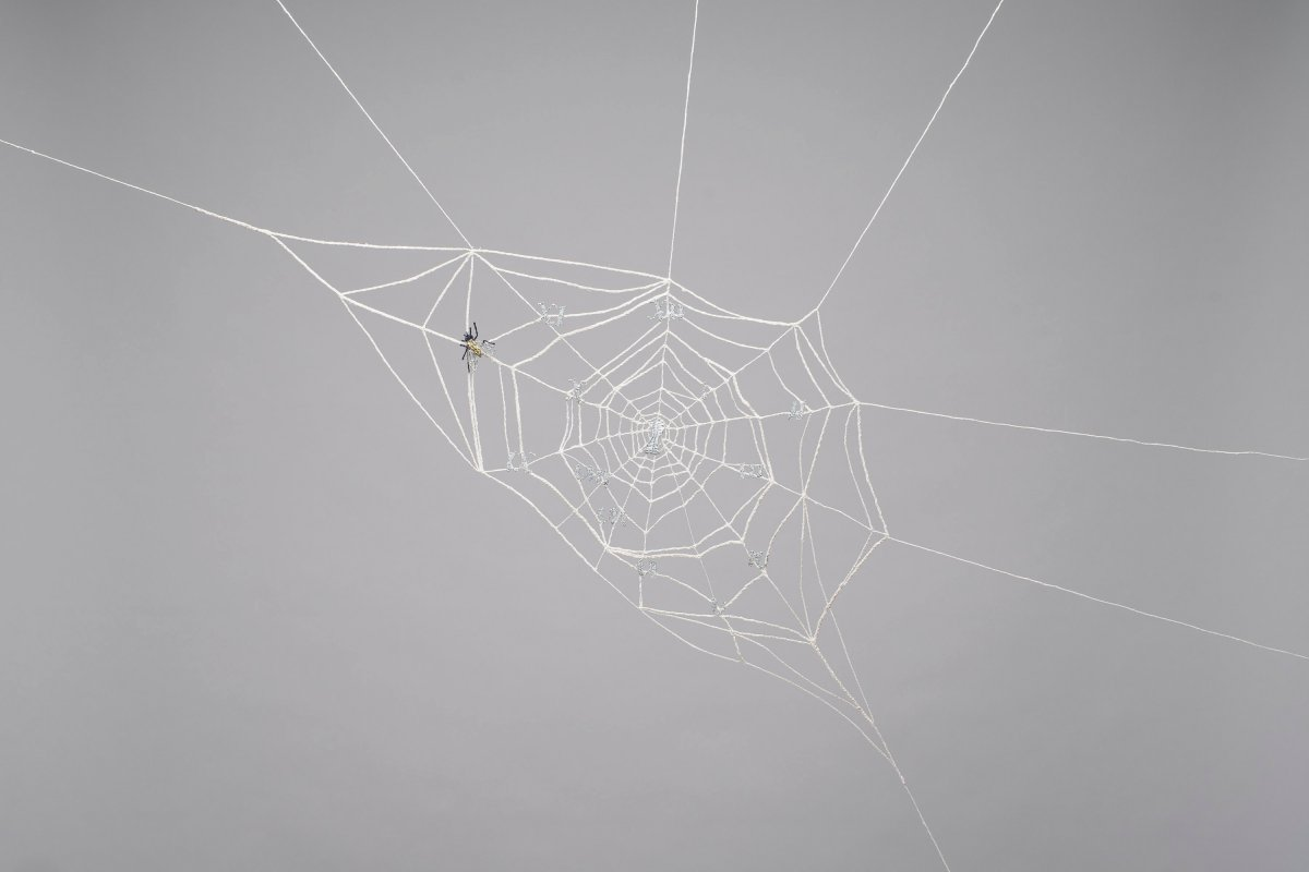 Spider web, Chronos (The Clock and the Spider)